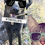 picture of a dog with sunglasses on and a cat with headphones and sunglasses